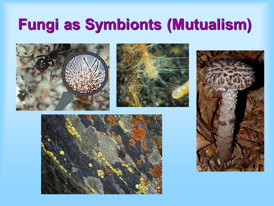 Fungi as Symbionts (Mutualism)
