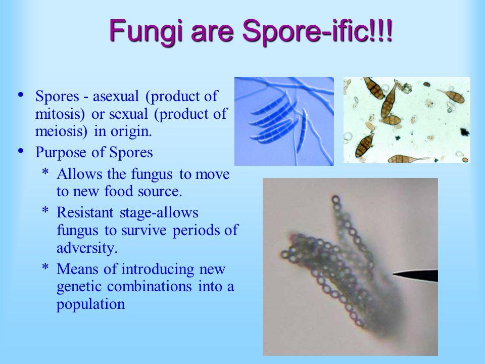 Fungi are Spore-ific!!.
