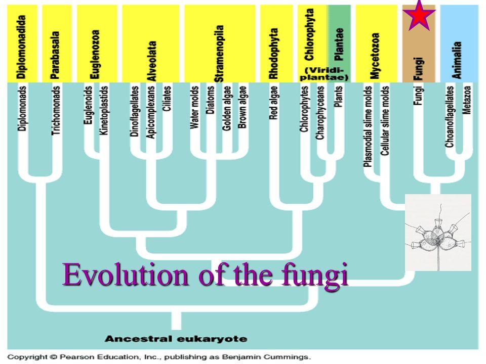 Evolution of the fungi