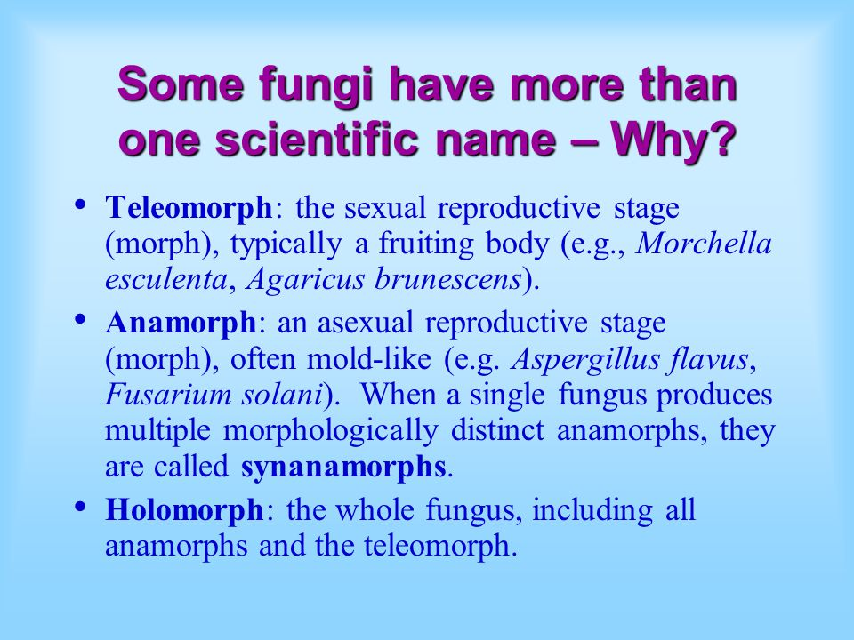 Some fungi have more than one scientific name – Why.