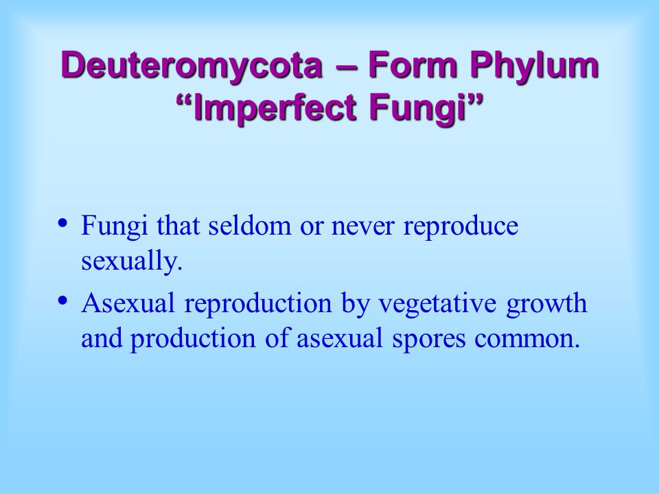 Deuteromycota – Form Phylum Imperfect Fungi Fungi that seldom or never reproduce sexually.