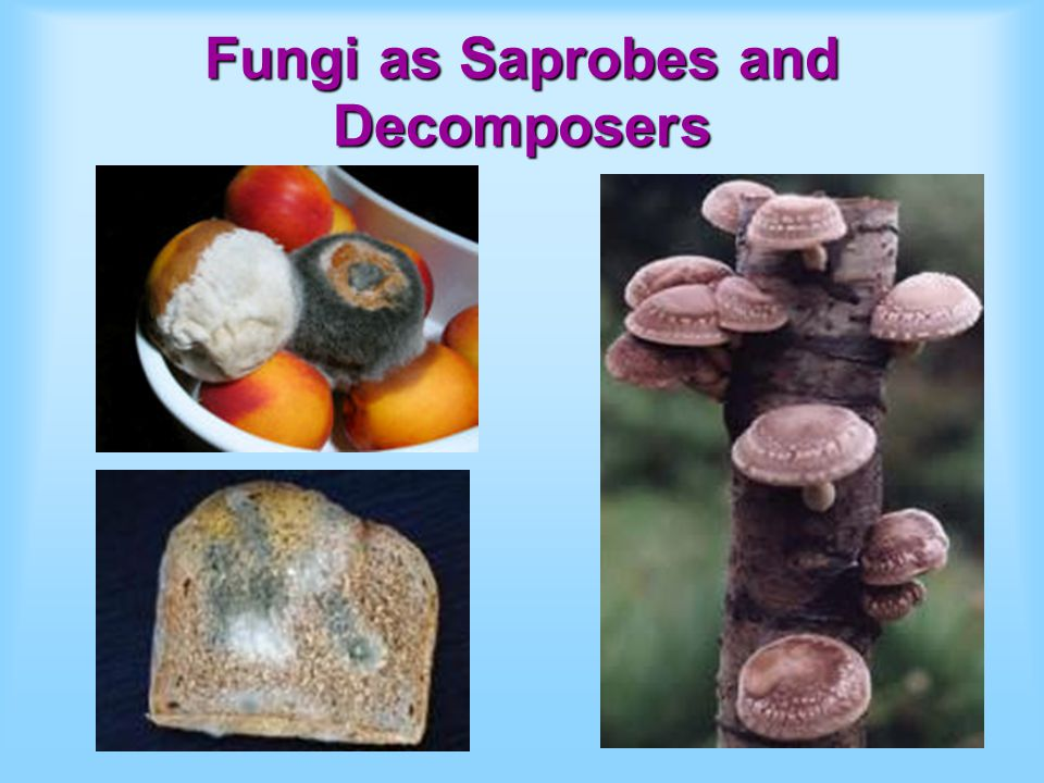 Fungi as Saprobes and Decomposers