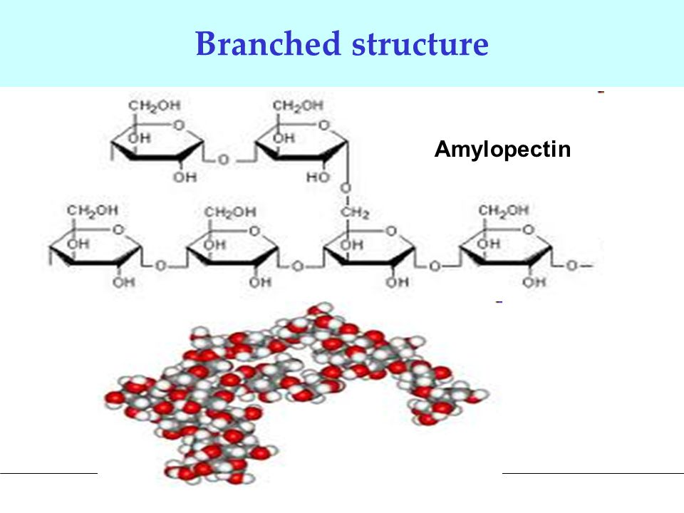 Branched structure Amylopectin