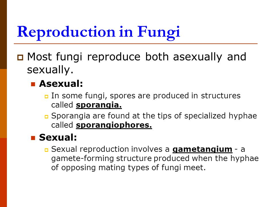 Reproduction in Fungi  Most fungi reproduce both asexually and sexually.