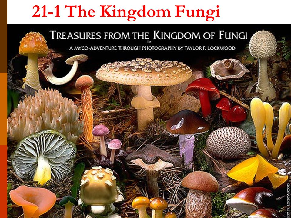 21-1 The Kingdom Fungi