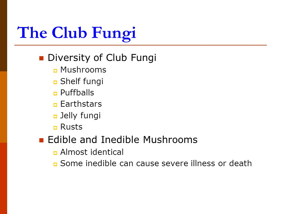 The Club Fungi Diversity of Club Fungi  Mushrooms  Shelf fungi  Puffballs  Earthstars  Jelly fungi  Rusts Edible and Inedible Mushrooms  Almost identical  Some inedible can cause severe illness or death