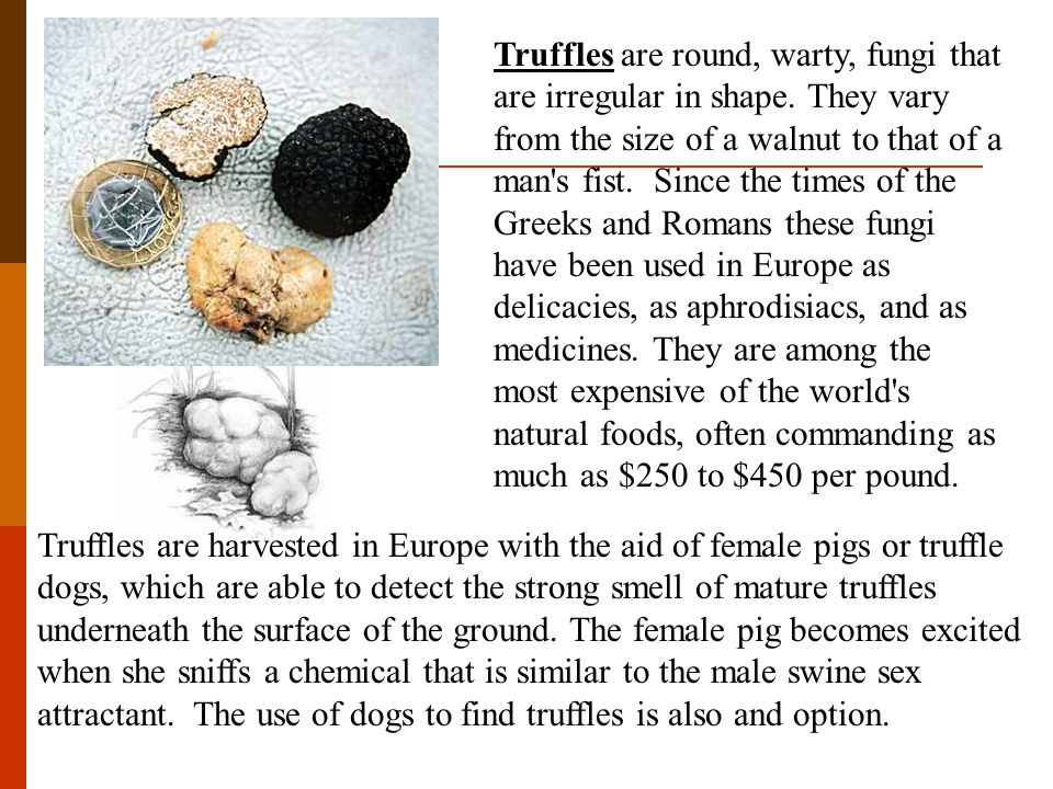 Truffles are round, warty, fungi that are irregular in shape.