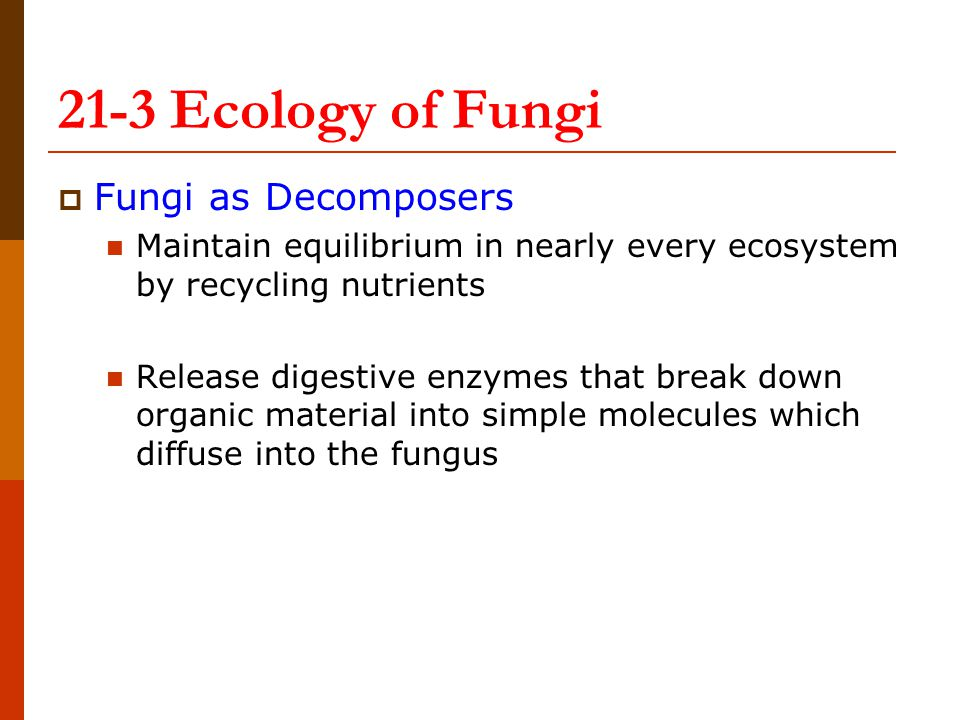  Fungi as Decomposers Maintain equilibrium in nearly every ecosystem by recycling nutrients Release digestive enzymes that break down organic material into simple molecules which diffuse into the fungus 21-3 Ecology of Fungi