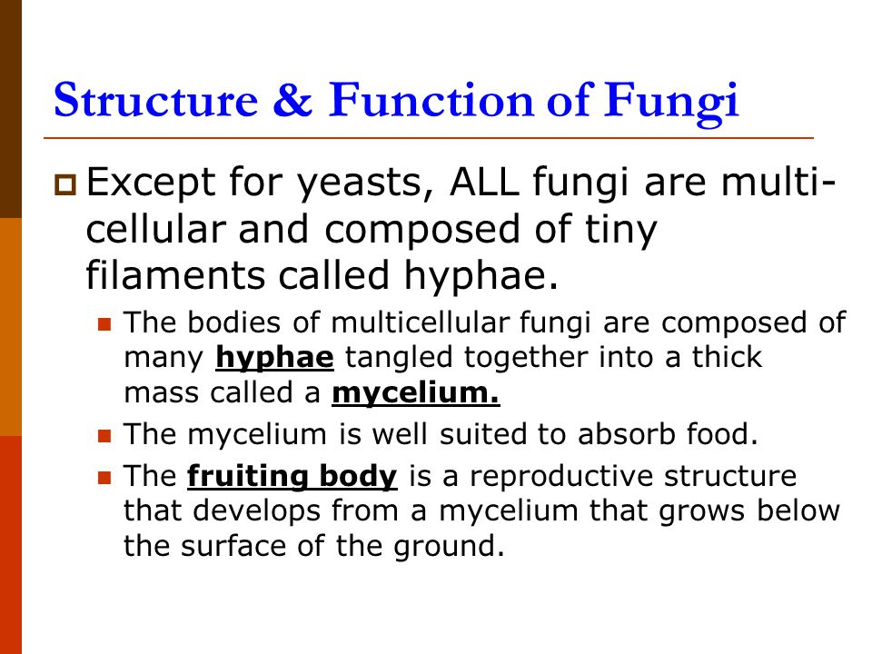 Structure & Function of Fungi  Except for yeasts, ALL fungi are multi- cellular and composed of tiny filaments called hyphae.