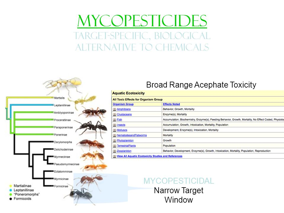 MYCOPESTICIDES TARGET-SPECIFIC, Biological alternative to chemicals Chemical Pesticide Large Target Window MYCOPESTICIDAL Narrow Target Window Broad Range Acephate Toxicity