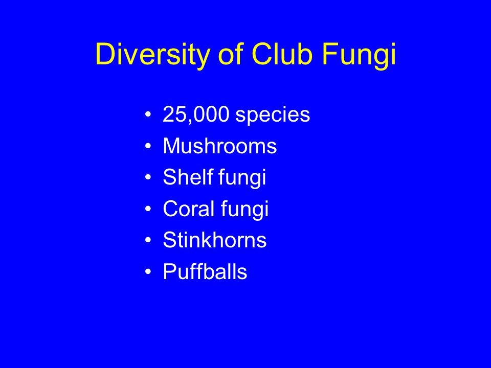 Diversity of Club Fungi 25,000 species Mushrooms Shelf fungi Coral fungi Stinkhorns Puffballs