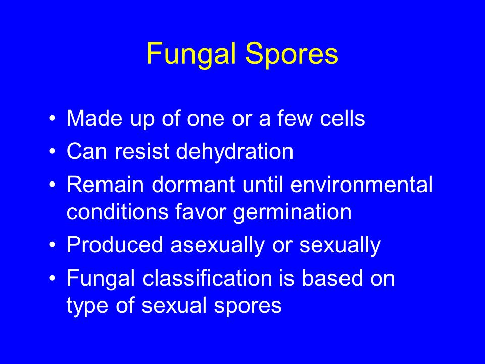 Fungal Spores Made up of one or a few cells Can resist dehydration Remain dormant until environmental conditions favor germination Produced asexually
