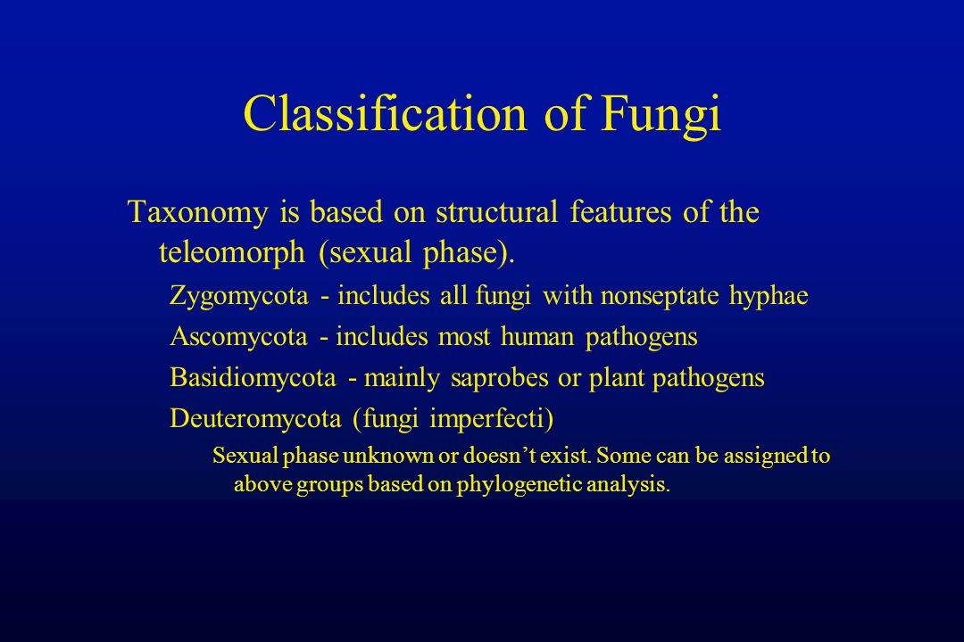 Classification of Fungi Taxonomy is based on structural features of the teleomorph (sexual phase). Zygomycota - includes all fungi with nonseptate hyp