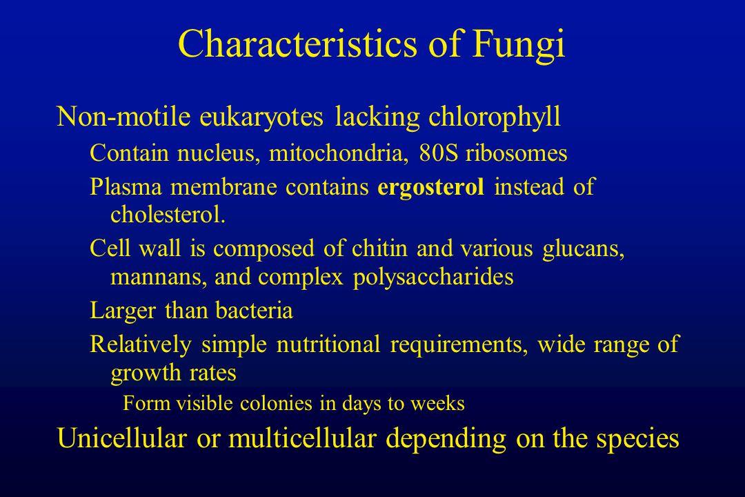 Characteristics of Fungi Non-motile eukaryotes lacking chlorophyll Contain nucleus, mitochondria, 80S ribosomes Plasma membrane contains ergosterol in