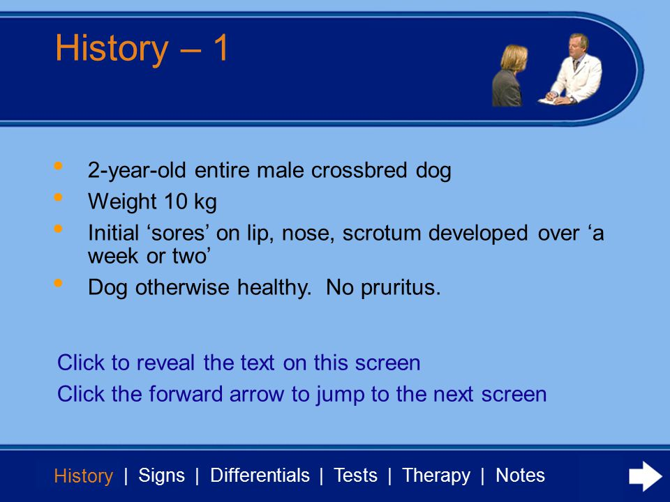 History | Signs | Differentials | Tests | Therapy | Notes History - 2 History Treated with antibiotics and steroids 2 weeks later no response Dog now shows malaise, anorexia