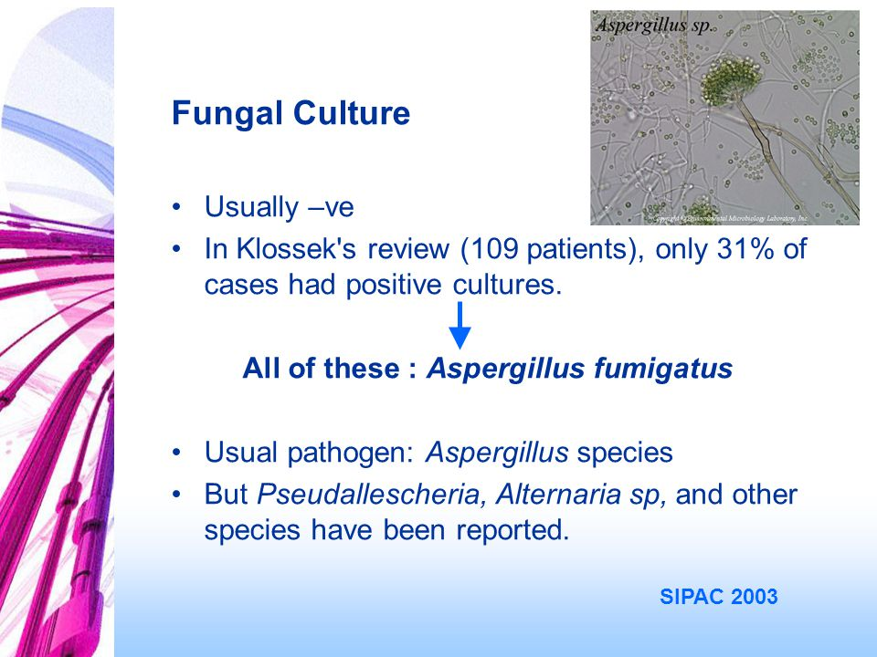 Fungal Culture Usually –ve In Klossek s review (109 patients), only 31% of cases had positive cultures.