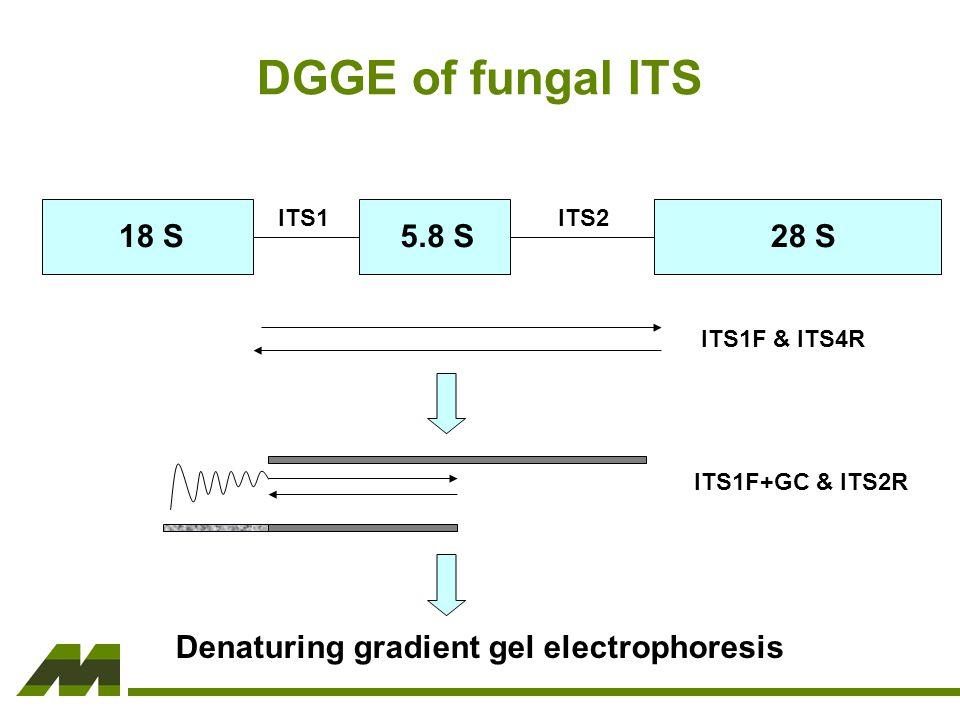 18 S5.8 S28 S ITS1ITS2 ITS1F & ITS4R ITS1F+GC & ITS2R Denaturing gradient gel electrophoresis DGGE of fungal ITS