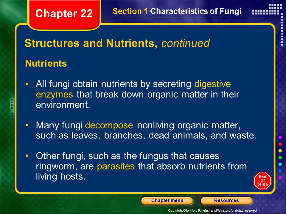 Copyright © by Holt, Rinehart and Winston. All rights reserved. ResourcesChapter menu Structures and Nutrients, continued Nutrients All fungi obtain n