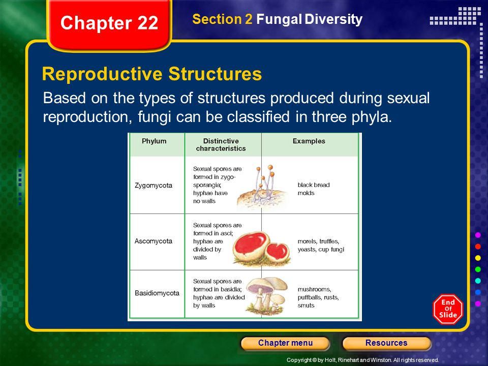 Copyright © by Holt, Rinehart and Winston. All rights reserved. ResourcesChapter menu Reproductive Structures Based on the types of structures produce
