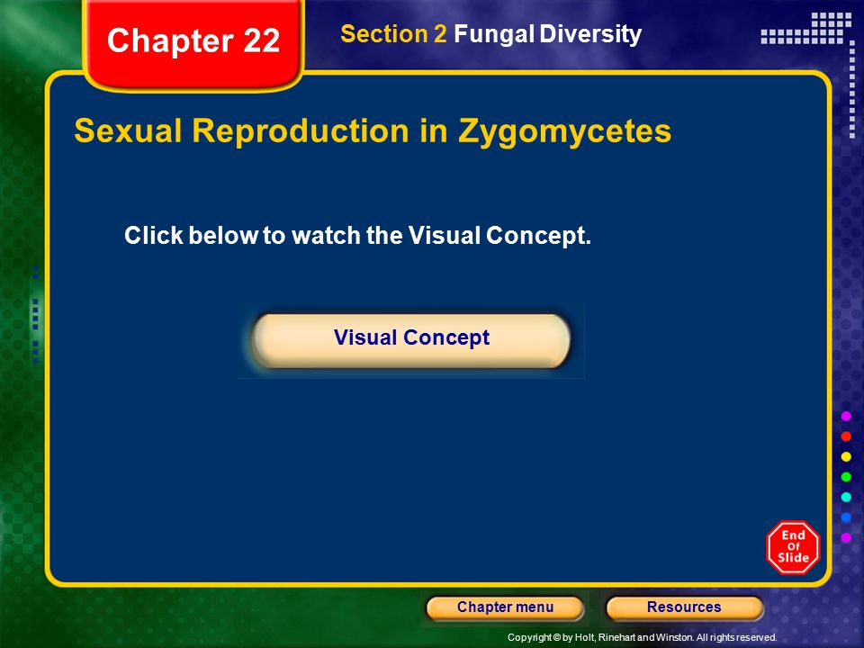 Copyright © by Holt, Rinehart and Winston. All rights reserved. ResourcesChapter menu Sexual Reproduction in Zygomycetes Section 2 Fungal Diversity Ch