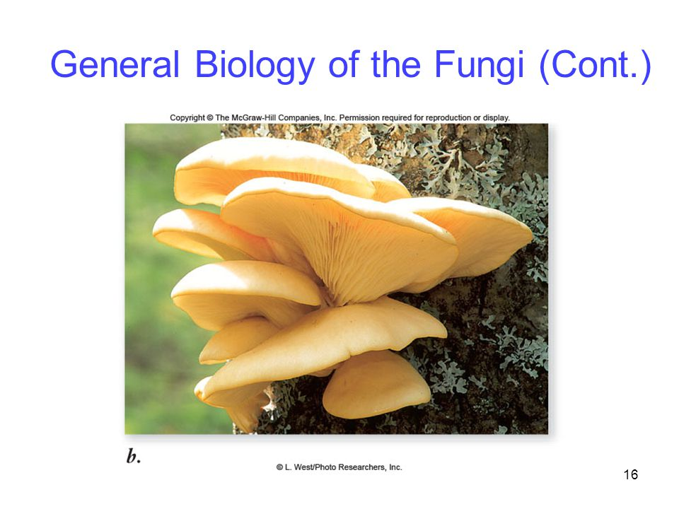 16 General Biology of the Fungi (Cont.)