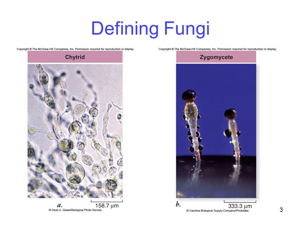 3 Defining Fungi