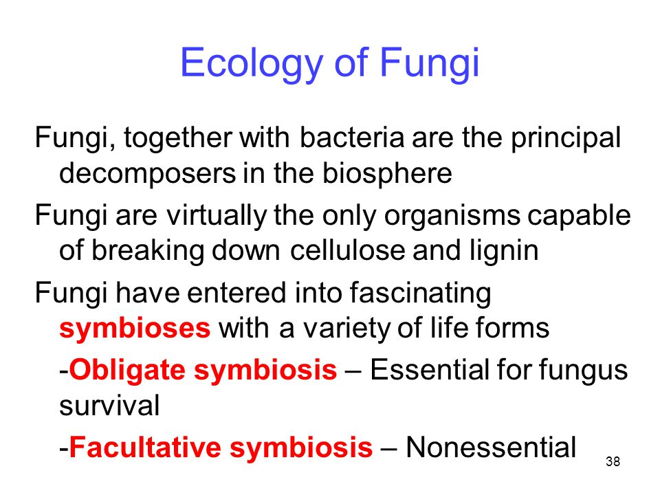 38 Ecology of Fungi Fungi, together with bacteria are the principal decomposers in the biosphere Fungi are virtually the only organisms capable of bre