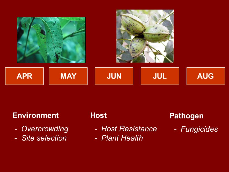 APRMAYJUNJULAUG Host - Host Resistance - Plant Health Environment - Overcrowding - Site selection Pathogen - Fungicides
