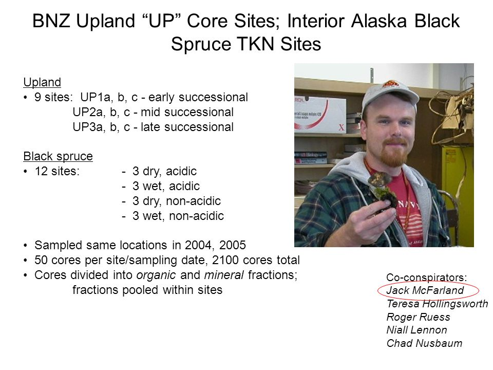BNZ Upland UP Core Sites; Interior Alaska Black Spruce TKN Sites Upland 9 sites: UP1a, b, c - early successional UP2a, b, c - mid successional UP3a, b, c - late successional Black spruce 12 sites:- 3 dry, acidic - 3 wet, acidic - 3 dry, non-acidic - 3 wet, non-acidic Sampled same locations in 2004, 2005 50 cores per site/sampling date, 2100 cores total Cores divided into organic and mineral fractions; fractions pooled within sites Co-conspirators: Jack McFarland Teresa Hollingsworth Roger Ruess Niall Lennon Chad Nusbaum