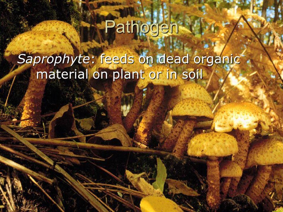 Pathogen Saprophyte: feeds on dead organic material on plant or in soil