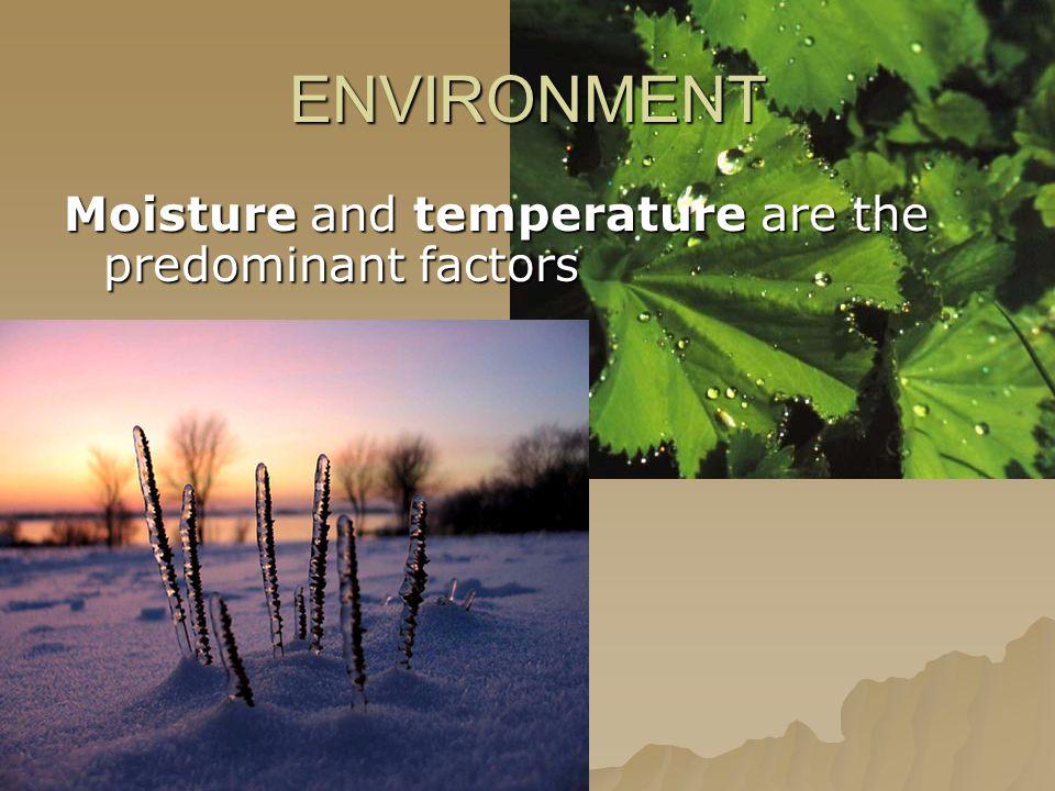 ENVIRONMENT Moisture and temperature are the predominant factors