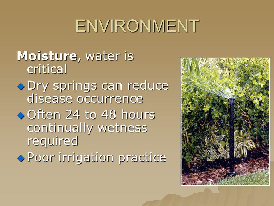 ENVIRONMENT Moisture, water is critical  Dry springs can reduce disease occurrence  Often 24 to 48 hours continually wetness required  Poor irrigation practice