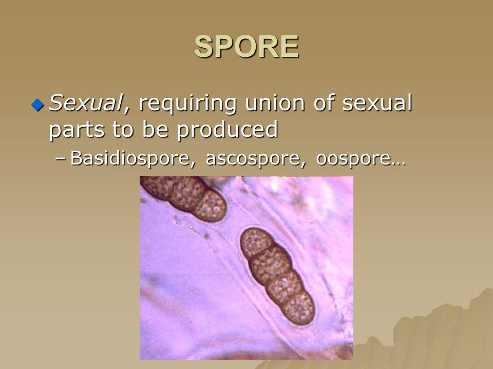 SPORE  Sexual, requiring union of sexual parts to be produced –Basidiospore, ascospore, oospore…
