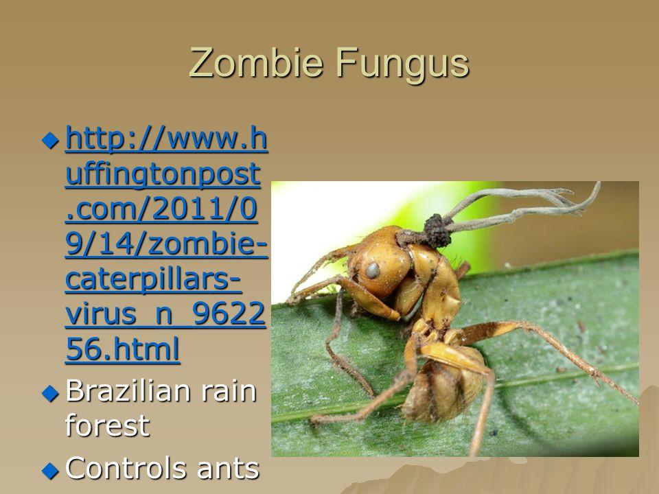 Zombie Fungus  http://www.h uffingtonpost.com/2011/0 9/14/zombie- caterpillars- virus_n_9622 56.html http://www.h uffingtonpost.com/2011/0 9/14/zombie- caterpillars- virus_n_9622 56.html http://www.h uffingtonpost.com/2011/0 9/14/zombie- caterpillars- virus_n_9622 56.html  Brazilian rain forest  Controls ants