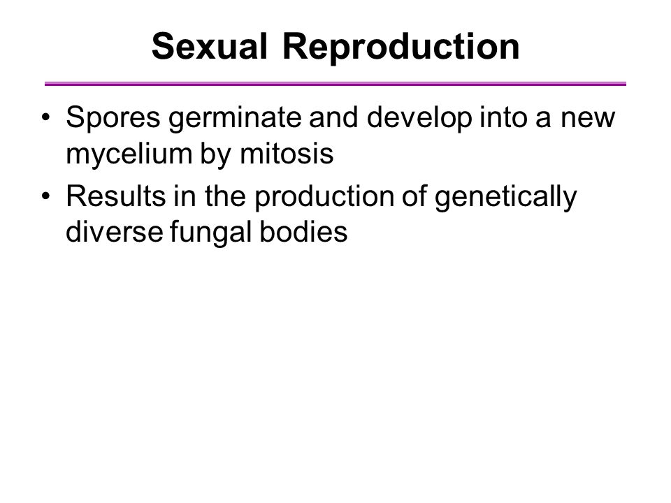 Sexual Reproduction Spores germinate and develop into a new mycelium by mitosis Results in the production of genetically diverse fungal bodies