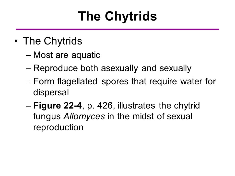 The Chytrids –Most are aquatic –Reproduce both asexually and sexually –Form flagellated spores that require water for dispersal –Figure 22-4, p.