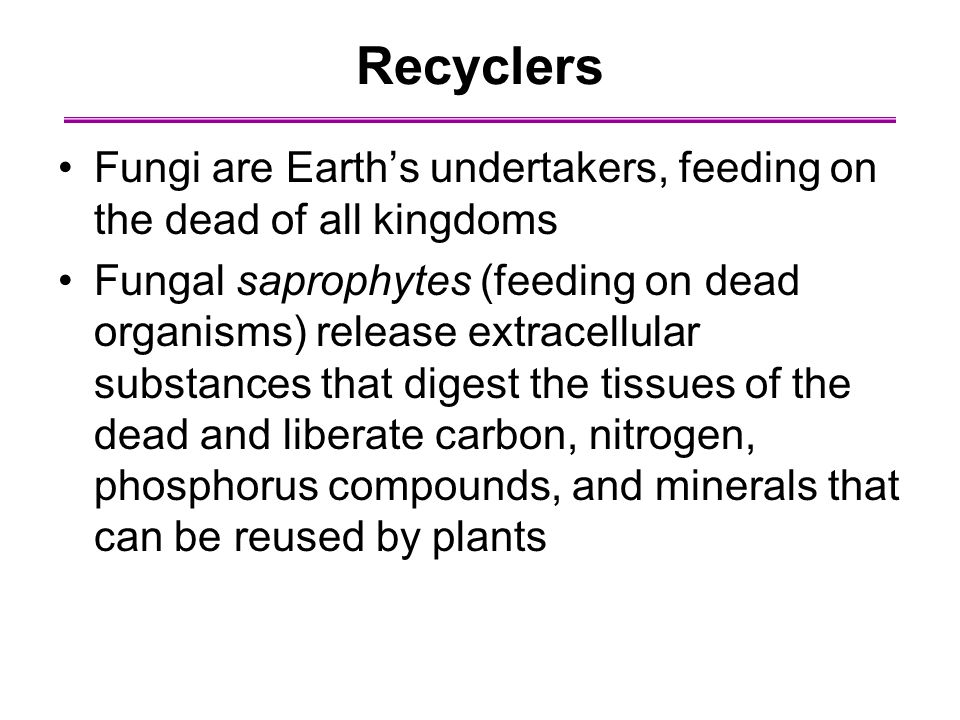 Recyclers Fungi are Earth's undertakers, feeding on the dead of all kingdoms Fungal saprophytes (feeding on dead organisms) release extracellular substances that digest the tissues of the dead and liberate carbon, nitrogen, phosphorus compounds, and minerals that can be reused by plants
