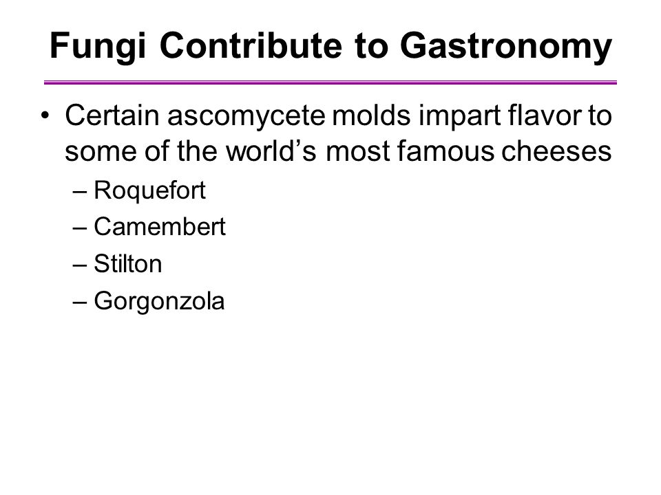 Fungi Contribute to Gastronomy Certain ascomycete molds impart flavor to some of the world's most famous cheeses –Roquefort –Camembert –Stilton –Gorgonzola