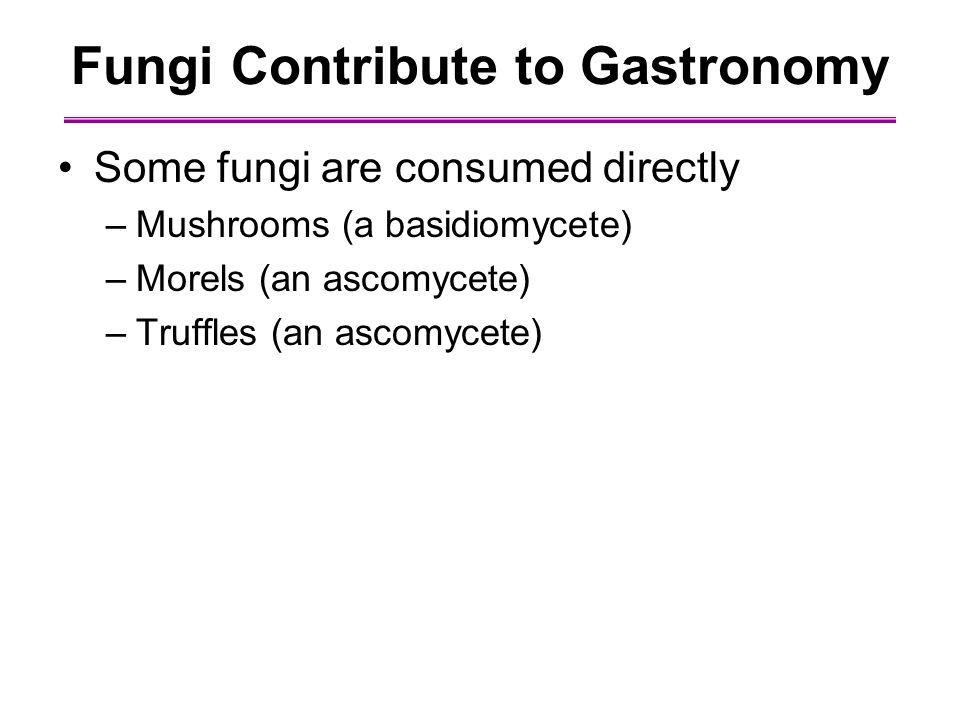 Fungi Contribute to Gastronomy Some fungi are consumed directly –Mushrooms (a basidiomycete) –Morels (an ascomycete) –Truffles (an ascomycete)