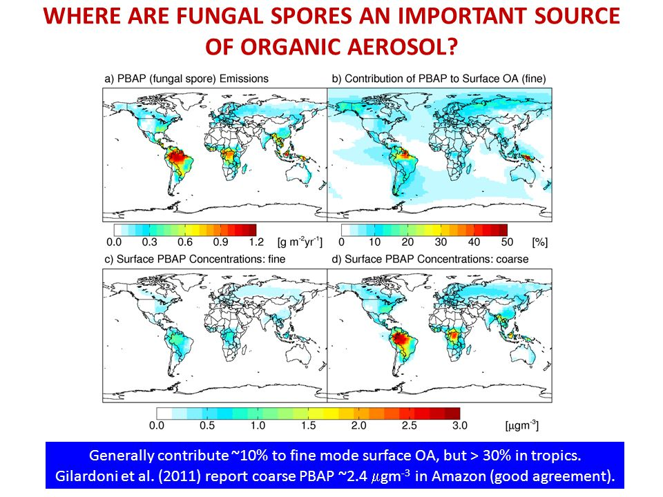 WHERE ARE FUNGAL SPORES AN IMPORTANT SOURCE OF ORGANIC AEROSOL.