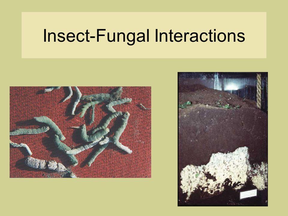Mutualism: Bark Beetles