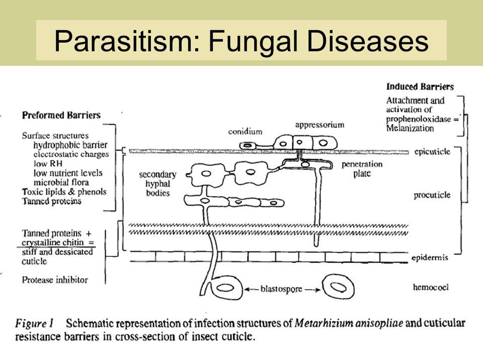 Parasitism: Fungal Diseases