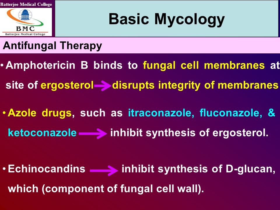 Batterjee Medical College Amphotericin B binds to fungal cell membranes at site of ergosterol disrupts integrity of membranes Basic Mycology Antifunga