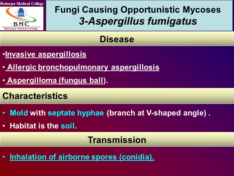 Batterjee Medical College Invasive aspergillosis Allergic bronchopulmonary aspergillosis Aspergilloma (fungus ball). Fungi Causing Opportunistic Mycos