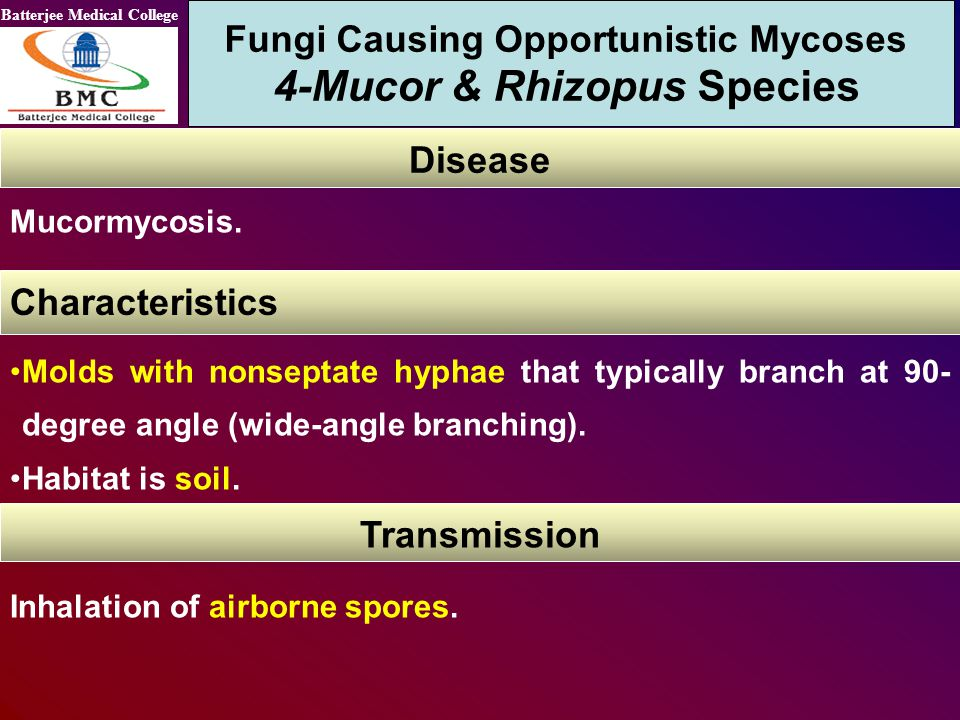 Batterjee Medical College Fungi Causing Opportunistic Mycoses 4-Mucor & Rhizopus Species Disease Characteristics Molds with nonseptate hyphae that typ