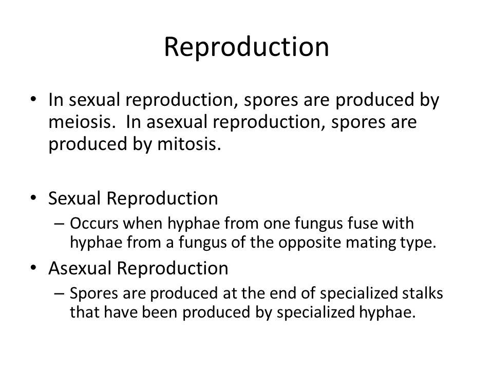 Reproduction In sexual reproduction, spores are produced by meiosis.