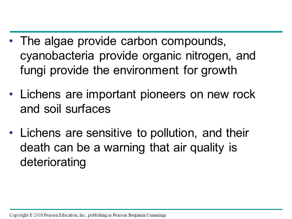 Copyright © 2008 Pearson Education, Inc., publishing as Pearson Benjamin Cummings The algae provide carbon compounds, cyanobacteria provide organic nitrogen, and fungi provide the environment for growth Lichens are important pioneers on new rock and soil surfaces Lichens are sensitive to pollution, and their death can be a warning that air quality is deteriorating