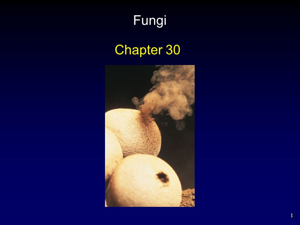 12 Ecology of Fungi Fungi and bacteria are the principal decomposers in the biosphere.