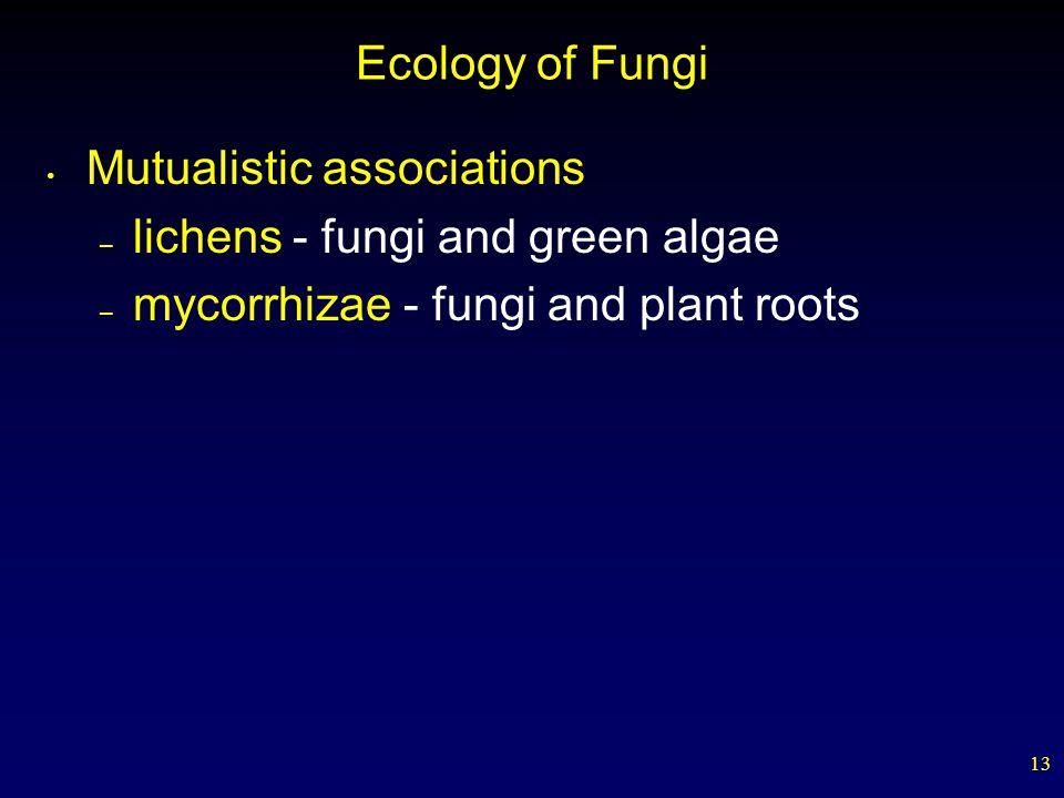 13 Ecology of Fungi Mutualistic associations – lichens - fungi and green algae – mycorrhizae - fungi and plant roots