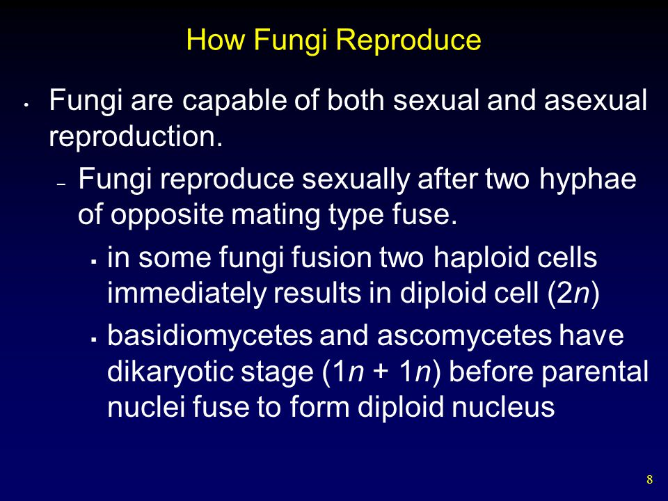 29 Summary Shared Characteristics The Body of a Fungus How Fungi Reproduce How Fungi Obtain Nutrients Ecology of Fungi Five Major Groups of Fungi Lichens Mycorrhizae Endophytes Symbioses